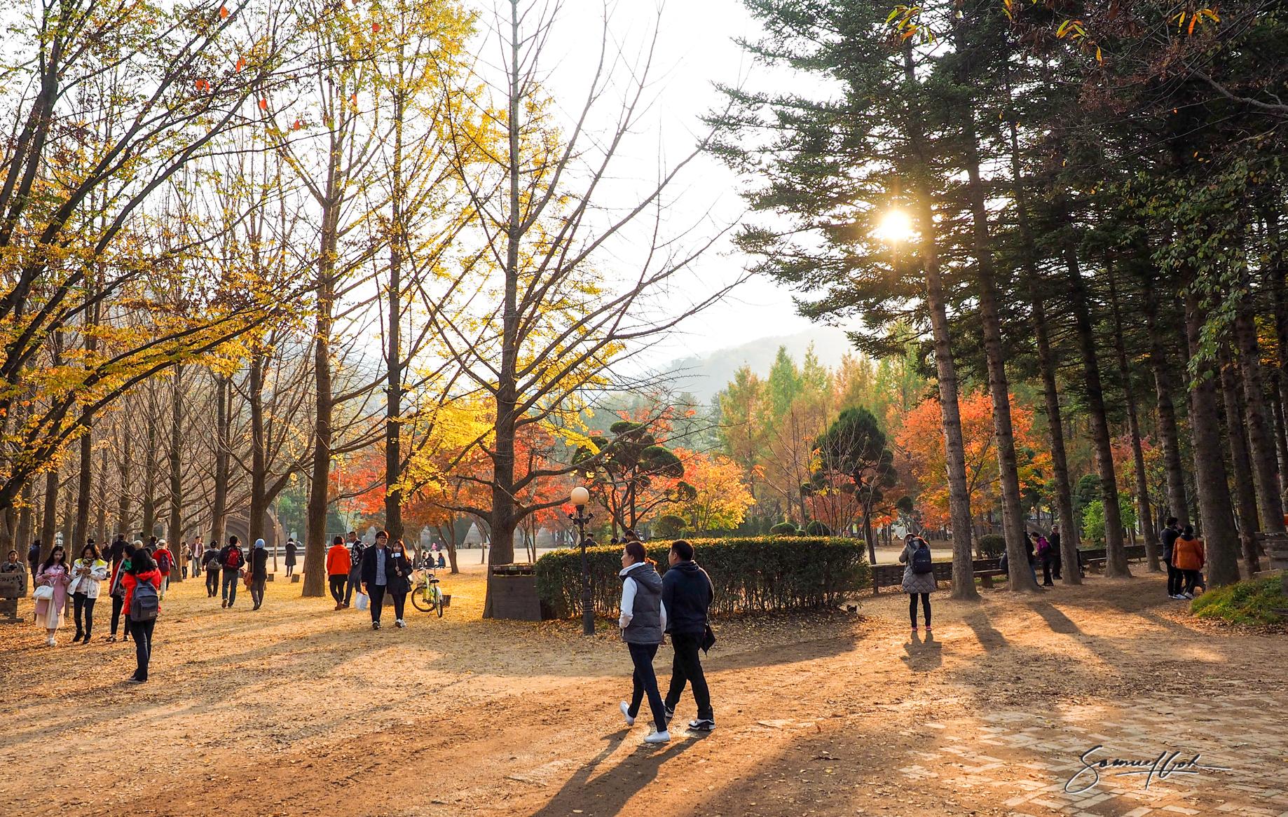 Nami Island, Seoul, South Korea