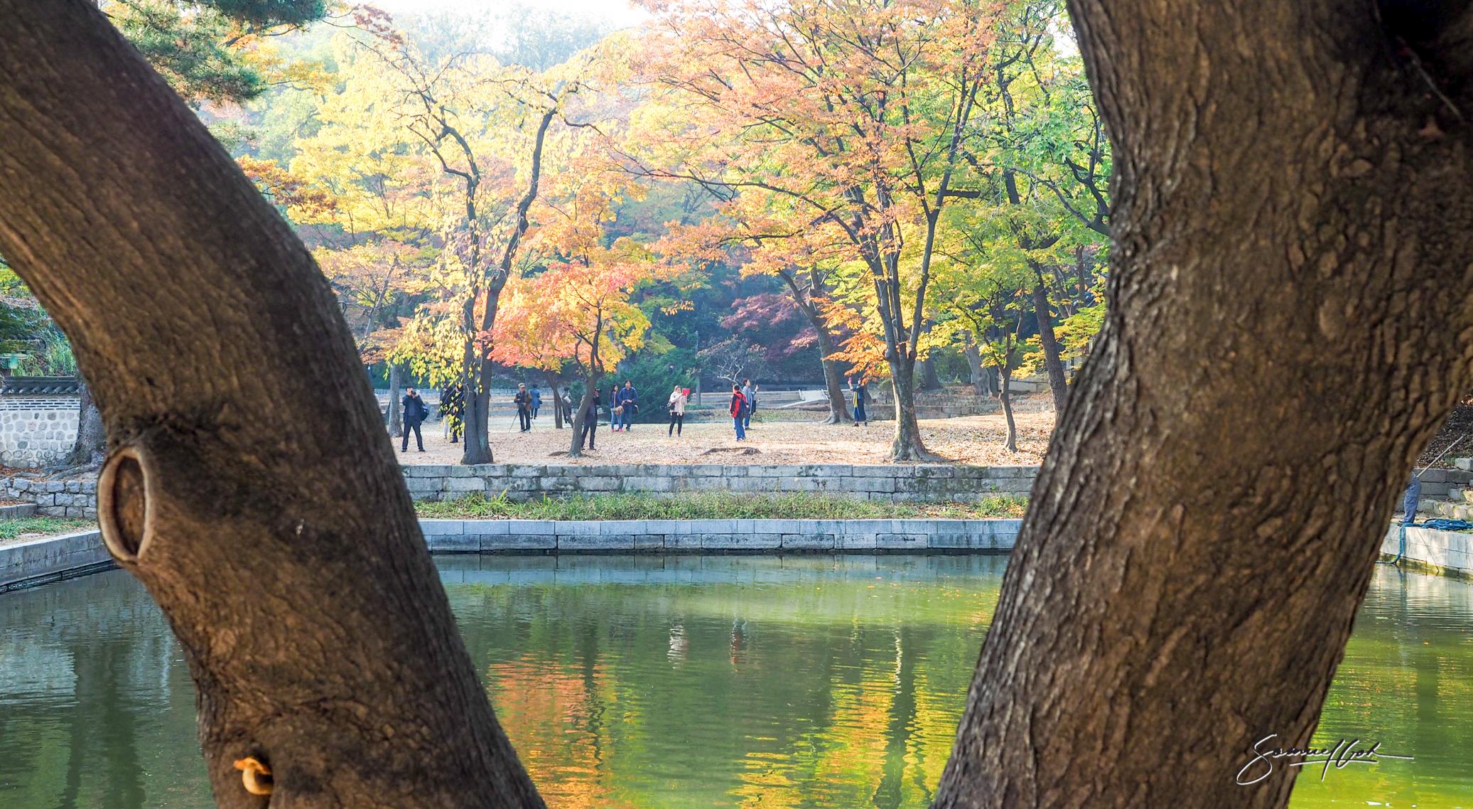 Changdeokgong, Seoul, South Korea.